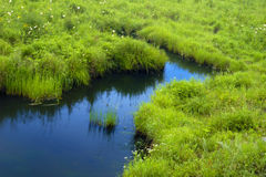 obszar trawiasty rzeki Zdjęcia Stock