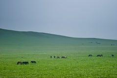 Obszar trawiasty sceneria Zdjęcie Stock