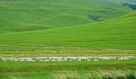 Obszar trawiasty sceneria fotografia royalty free