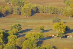 Obszar trawiasty w jesieni Obrazy Royalty Free