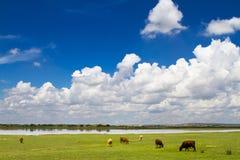 Obszar trawiasty w Wewnętrzny Mongolia Obraz Stock