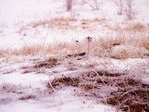 Obszar trawiasty w zimie Fotografia Royalty Free