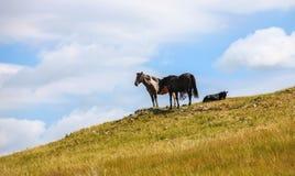 obszar trawiasty wewnętrzny Mongolia Obrazy Stock