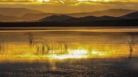 obszar trawiasty wewnętrzny Mongolia Obraz Royalty Free