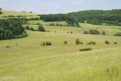 Obszar trawiasty wiosny krajobrazu zielona łąka z wzgórze lasem Zdjęcie Stock