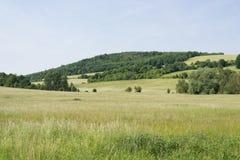 Obszar trawiasty wiosny krajobrazu zielona łąka z wzgórze lasem Zdjęcia Stock