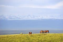 Obszar trawiasty z śnieżnymi górami Obrazy Royalty Free