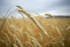 obszar upraw, Zdjęcie Royalty Free