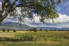 Obszar wiejski blisko Trevi w Umbria Zdjęcia Royalty Free