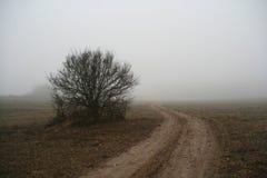 obszar wiejskiej mgła. zdjęcie stock