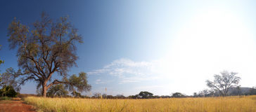 Obszaru trawiastego afrykanina sawanna Zdjęcie Stock