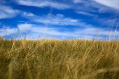 Obszaru trawiastego krajobraz Fotografia Stock
