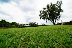 Obszaru trawiastego pole obraz royalty free