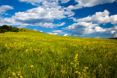 obszaru trawiasty krajobraz Zdjęcia Royalty Free