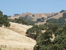 obszaru trawiasty wzgórzy target2504_1_ Obrazy Stock