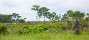 Obszary trawiaści Południowy Floryda zdjęcia stock