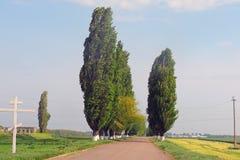 Obszary wiejscy pole Droga Drzewa Fotografia Stock