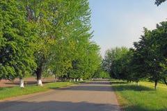 Obszary wiejscy pole Droga Drzewa Obraz Stock