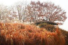 Obtenez le repos en parc de haneul Images libres de droits