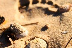Obtenha alguma areia entre seus dedos do pé Imagem de Stock