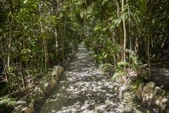 Obtenha ao Cenote Azul fotos de stock
