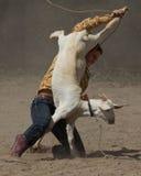 Obtention de votre chèvre Photo stock