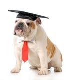 Obtention du diplôme d'animal familier Images libres de droits
