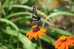 Obtention du pollen Images libres de droits
