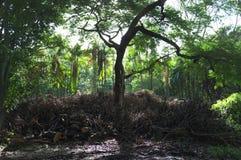 Obtention perdue quelque part dans une forêt de merveille images libres de droits