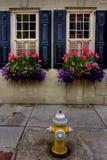 Obturadores pretos da janela, flores da mola e Fireplug amarelo Fotografia de Stock Royalty Free