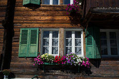 Obturadores ventana y flores Fotografía de archivo