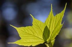 obudzenia lasu wiosna zdjęcia royalty free
