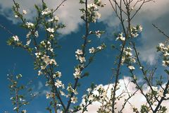 Obudzić kwitnie w łące zdjęcie stock