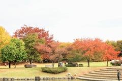 Obuse 免版税图库摄影