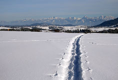 obuwiani śnieżni ślada Zdjęcie Stock