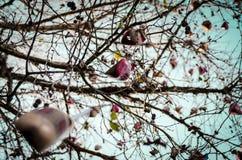 Obuwiany drzewo w Holambra zdjęcia royalty free