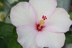 Obuwiany kwiat obraz stock