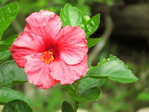 Obuwiany kwiat Fotografia Stock
