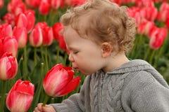 obwąchania berbecia tulipan Obraz Royalty Free