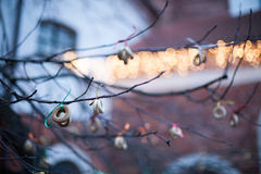 Obwarzanki na drzewie fotografia royalty free