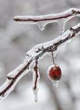 obwieszenie jagodowy lód Obrazy Stock