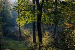 Obygden landskap, träd som skiner till och med sidor Arkivbilder
