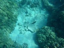 Océan d'Hawaï Photographie stock libre de droits