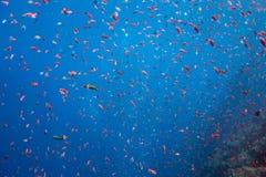 Océan des poissons Photographie stock