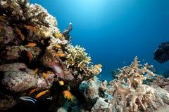 Océan et poissons photographie stock libre de droits