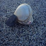 Océan Shell Image libre de droits