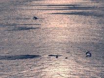 Océano bajo cubierta transparente del hielo El resplandor del sol en el hielo plano Imágenes de archivo libres de regalías
