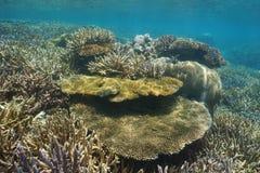 Océano bajo subacuático de South Pacific del filón de los corales fotografía de archivo