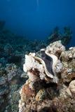 Océano, coral y almeja gigante Fotos de archivo libres de regalías