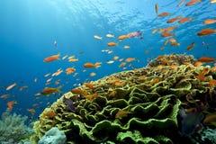 Océano, coral y pescados imagen de archivo libre de regalías